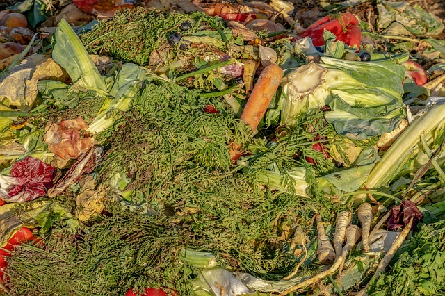 How To Compost? Everything You Need To Know